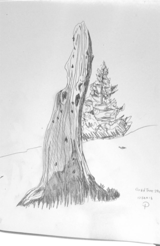 Dead Tree Graphite on Paper